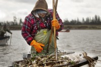 Oyster fish harvester
